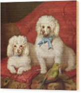 A Pair Of Poodles Wood Print by English School