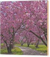 A Walk Down Cherry Blossom Lane Wood Print by Cindy Lee Longhini
