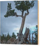 Against The Odds Wood Print by Idaho Scenic Images Linda Lantzy