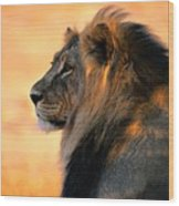 An Adult Male African Lion, Panthera Wood Print by Nicole Duplaix