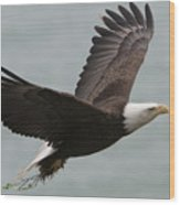 An American Bald Eagle Soaring Wood Print by Roy Toft