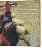 An Italian Rice Field Wood Print by Angelo Morbelli
