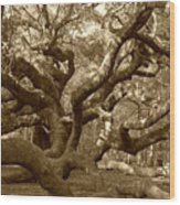Angel Oak In Sepia Wood Print by Suzanne Gaff