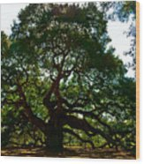 Angel Oak Tree 2004 Wood Print by Louis Dallara