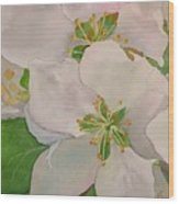 Apple Blossoms Wood Print by Sharon E Allen