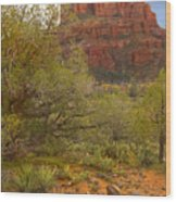 Arizona Outback 3 Wood Print by Mike McGlothlen