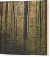 Autumn In The Woods Wood Print by Andrew Soundarajan