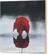 Autumns Final Descent Wood Print by William Carroll