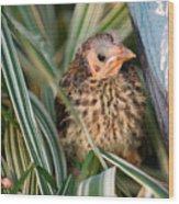 Baby Bird Hiding In Grass Wood Print by Douglas Barnett