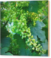 Backyard Garden Series - Young Grapes Wood Print by Carol Groenen