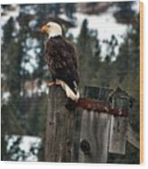 Baldy On A Post Wood Print by Don Mann