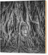 Banyan Tree Wood Print by Adrian Evans