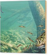 Bass Lake Wood Print by JQ Licensing