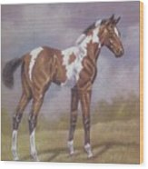 Bay Paint Foal Wood Print by Dorothy Coatsworth