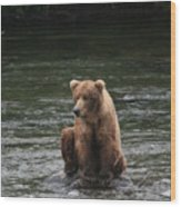 Bear Sitting On Water Wood Print by Tracey Hunnewell