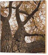 Big Tree Wood Print by James BO  Insogna