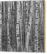 Birch Stand Wood Print by Ron Kochanowski - www.kochanowski.us