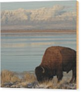 Bison In Front Of Snowy Mountains Wood Print by Mathew Levine