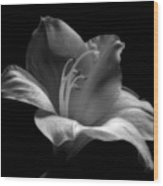Black And White Lily Wood Print by Artecco Fine Art Photography