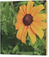 Black Eyed Susan 2 Wood Print by Marjorie Imbeau