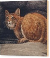 Bobcat On Ledge Wood Print by Frank Wilson