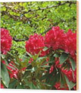 Botanical Garden Art Prints Red Rhodies Trees Baslee Troutman Wood Print by Baslee Troutman