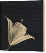 Botanical Study 3 Wood Print by Brian Drake - Printscapes