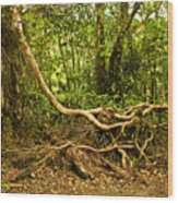 Branching Out In Costa Rica Wood Print by Madeline Ellis