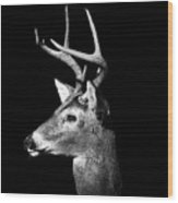 Buck In Black And White Wood Print by Malcolm MacGregor
