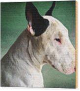 Bull Terrier On Green Wood Print by Michael Tompsett