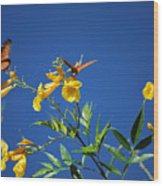 Butterfly In The Sonoran Desert Musuem Wood Print by Donna Greene