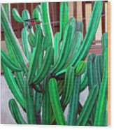 Cactus Fly By Wood Print by Snake Jagger