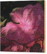 Caladium Mystery Wood Print by Suzanne Gaff