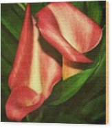 Calla Lillys Wood Print by Cathie Tyler