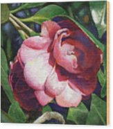 Camellianne Wood Print by Andrew King