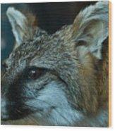 Canis Species Wood Print by Douglas Barnett