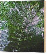 Canopy Of Ferns Wood Print by Elizabeth Hoskinson