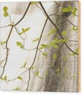 Cascade Falls Rushes Down  Cascade Wood Print by Phil Schermeister