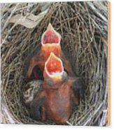 Cavernous Cardinals Wood Print by Al Powell Photography USA