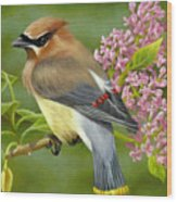 Cedar Waxwing On Lilac Wood Print by Karen Coombes