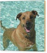 Charlie In Pool Wood Print by Rebecca Wood