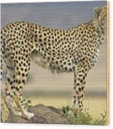 Cheetah Acinonyx Jubatus On Termite Wood Print by Winfried Wisniewski