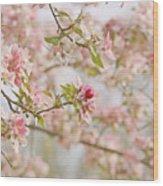Cherry Blossom Delight Wood Print by Kim Hojnacki