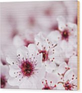 Cherry Blossoms Wood Print by Elena Elisseeva