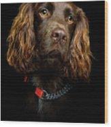 Cocker Spaniel Puppy Wood Print by Andrew Davies