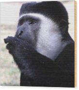 Colobus Monkey Wood Print by Aidan Moran