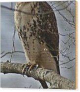 Cooper's Hawk 2 Wood Print by Joe Faherty