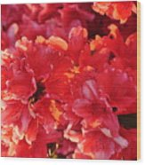 Coral Pink Azaleas Wood Print by Jan Amiss Photography