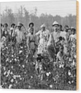 Cotton Planter & Pickers, C1908 Wood Print by Granger