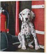 Dalmatian Puppy With Fireman's Helmet  Wood Print by Garry Gay
